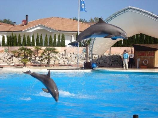 Lässt Delfin-Importverbot Schlupflöcher?