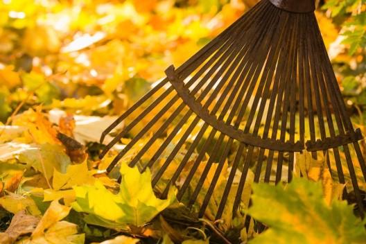 Zeit für den Herbstputz