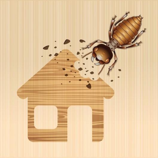 Hausschädlinge auf dem Vormarsch