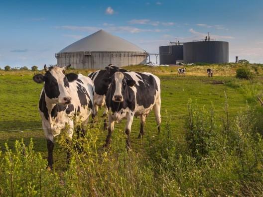 Einheimisches Biogas: Einspeisung steigt um 23%