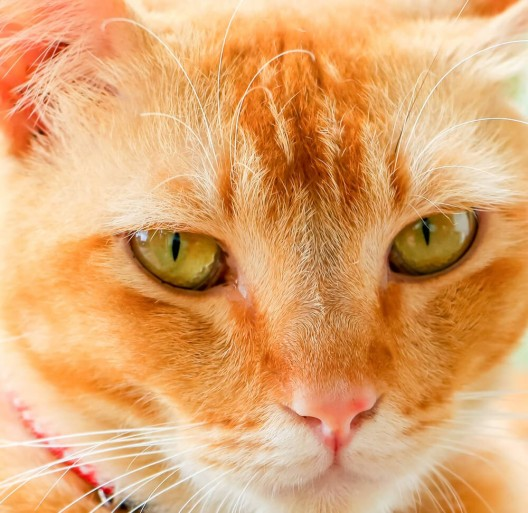 Bei Tierquälereien erhebliche Defizite in der Strafverfolgung