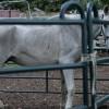 Ungeheure Pferdequälerei in Hefenhofen TG - Zeit zu handeln