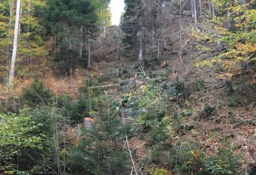 Chur GR: Forstarbeiter (50) von Stahlseil getroffen und verletzt