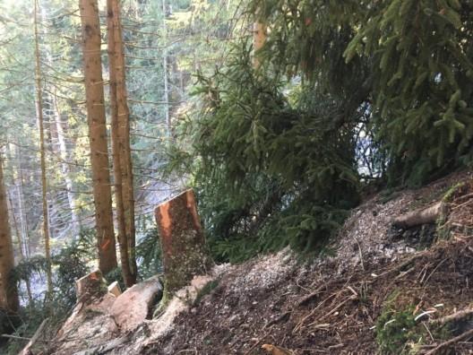Sool GR: Schweizer (39) bei Holzerarbeiten von Baum erfasst und verletzt