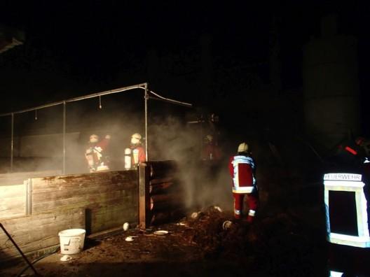 Leuggern AG: Schweinestall brannte – einige Schweine mussten erlöst werden