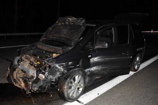 Mörschwil SG: Mehrere Fahrzeuge mit Wildschweinen kollidiert – acht Tiere tot
