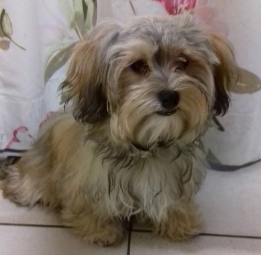 Wil SG: Hundewelpen aus Garten gestohlen