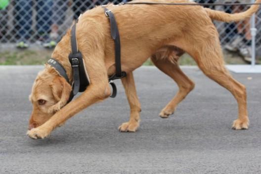 Stein AR: Vermisster Senior (83) durch Polizeihund Lupo aufgefunden