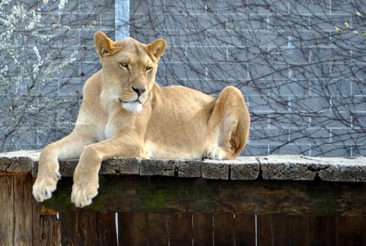 Der Plättli Zoo in Frauenfeld verheisst spannende Erlebnisse für Gross und Klein