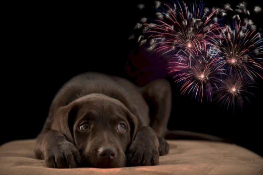 Feuerwerk am 1. August bedeutet für Tiere Stress und Gefahr: Rücksicht nehmen!