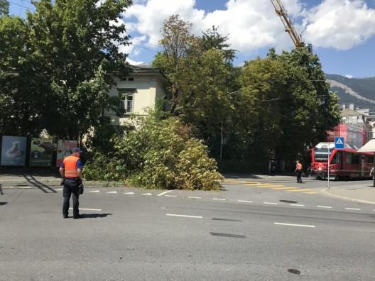 Chur GR: Rosskastanie stürzt auf Strasse - Zugverkehr kurzzeitig unterbrochen