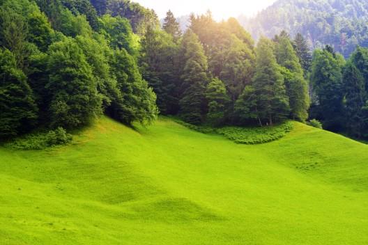 Kanton Uri: Trockenheit und Hitze - Feuerverbot im Wald und in Waldesnähe