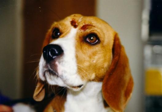Erste Hilfe für Tiere – so wird der Notfall nicht zur Tragödie