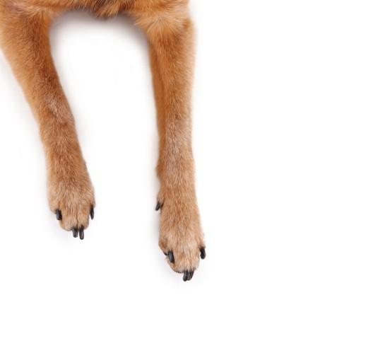 Chur GR: Hund läuft vor Auto