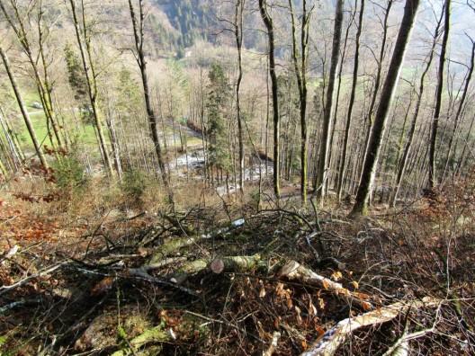 Glarus GL: 46-jähriger Forstwart tödlich verunglückt