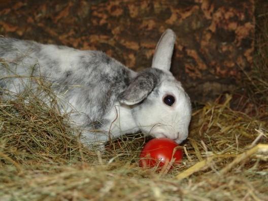 Bitte beachten! Kaninchen eignen sich nicht als Ostergeschenke