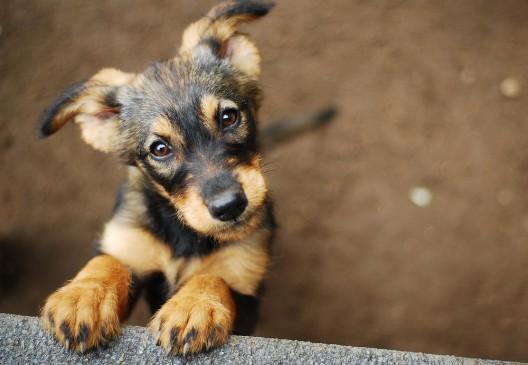 Warnung an Hundehalter! Giftköder gefunden