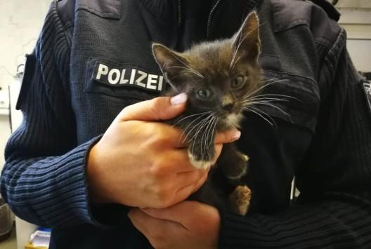 Autofahrerin entdeckt ausgesetzte junge Katzen – Hinweise erbeten