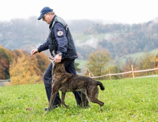 """Diegten BL: Daniel Hagmann gewinnt mit """"Macho"""" die Polizeihundeprüfung"""