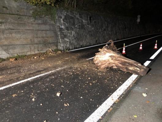 Brunnen SZ: Morscher Baumstrunk fiel auf Axenstrasse