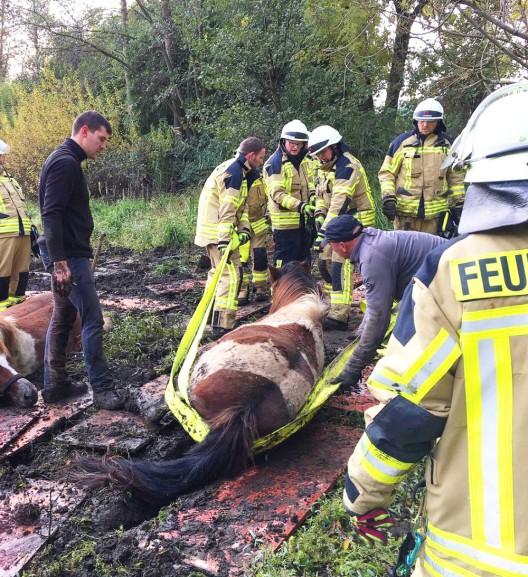 Großtierrettung in Rheurdt: Acht Pferde aus Schlammloch gerettet