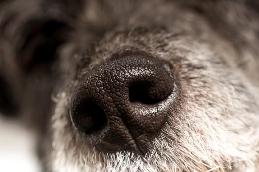 Hund angefahren und schwer verletzt - Unfallverursacher fährt davon