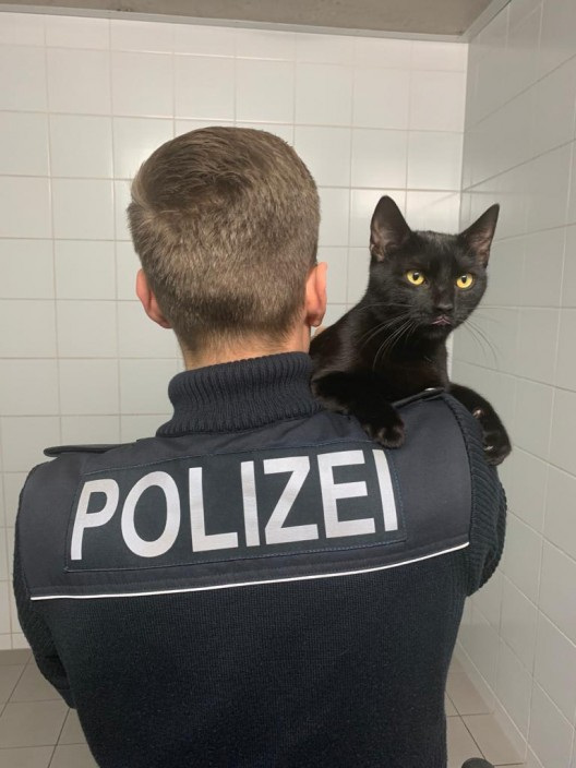 Katze ausgebüchst - Bundespolizei Hamburg findet