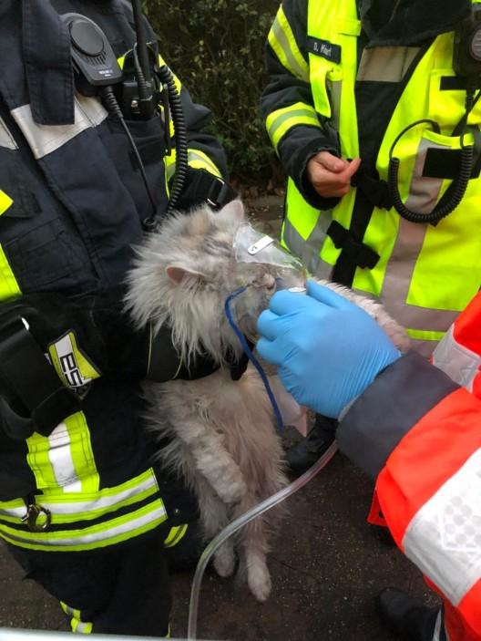 Zimmerbrand mit Menschen- und Tierrettung
