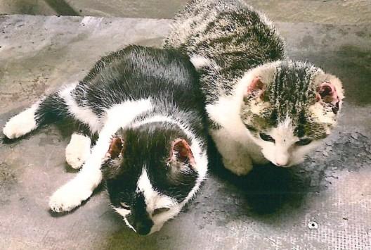Tierquälerei mit tödlichen Ausgang, mehrere tote Katzen gefunden, die Polizei sucht Zeugen
