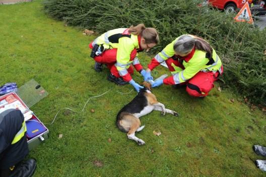 Steinhausen ZG: Hund aus verrauchter Wohnung gerettet