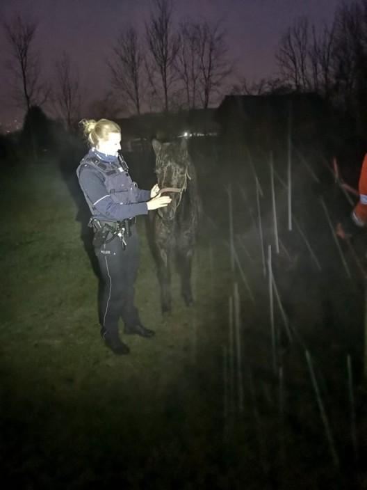 Polizei fängt entlaufene Pferde