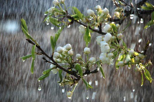 Sonne-und-Regen-Sundraw-Photography-shutterstock.com