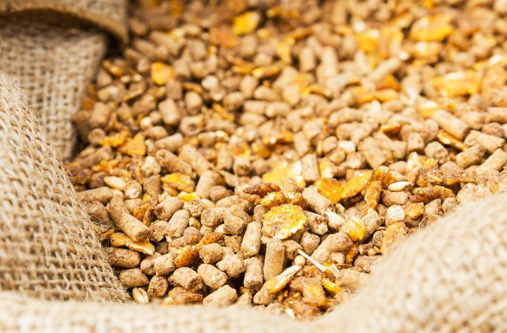 Erlaubt ist der Verkauf von Futtermitteln, die maximal 0,9 % Gentech-Anteile aufweisen. (Bild: stoonn / Shutterstock.com)