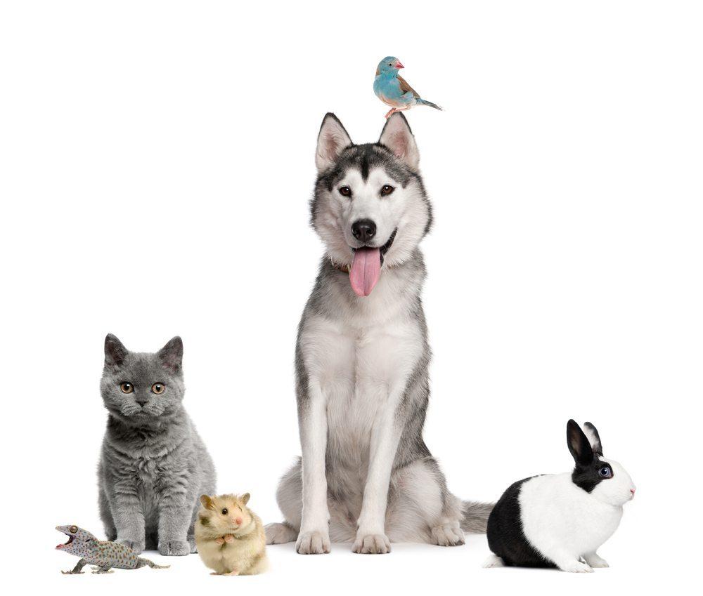 Der Hund trifft nicht nur auf Menschen in seinem neuen Zuhause, auch andere Haustiere, wie Vögel und Hamster, können eine Herausforderung sein. (Bild: Eric Isselee / Shutterstock.com)