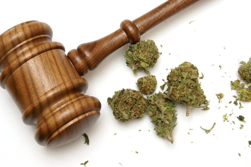 Initiative forderte bereits 2008 die Legalisierung von Anbau, Erwerb und Besitz von Hanf. (Bild: Matthew Benoit / Shutterstock.com)