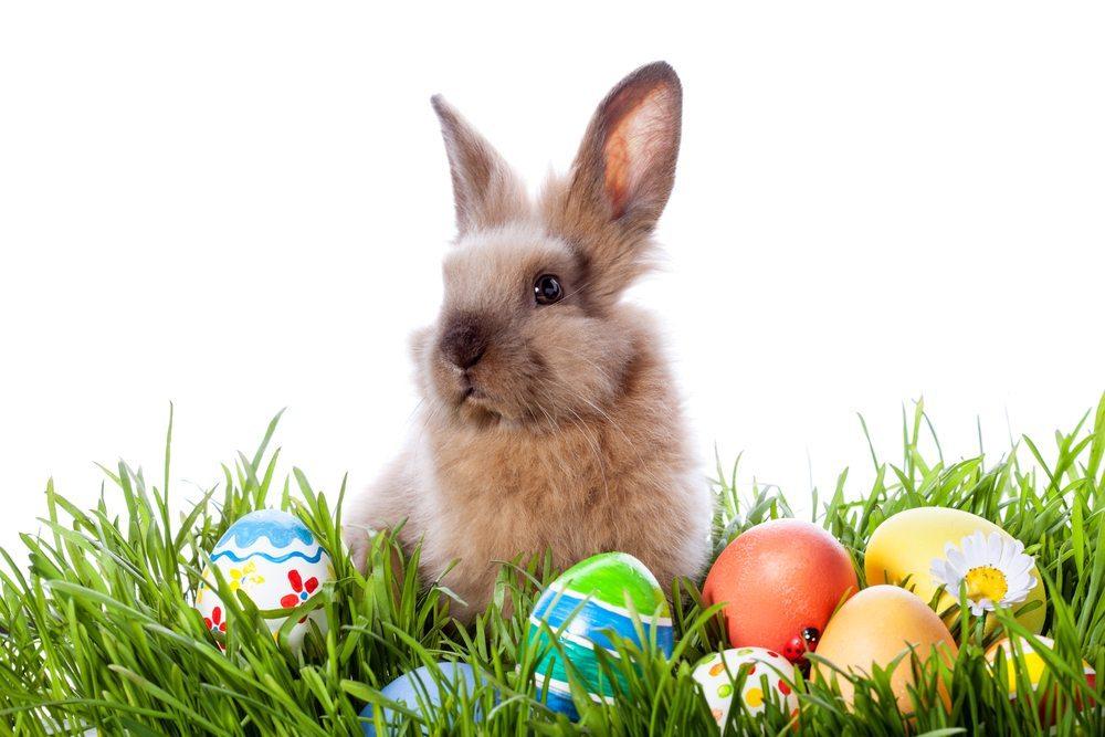 Ostern ist nicht alle Tage. (Bild: Tiplyashina Evgeniya / Shutterstock.com)