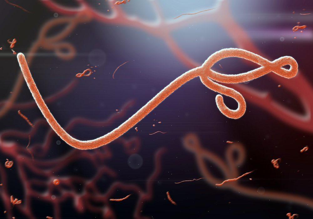 Ebola Virus. (Bild: jaddingt / Shutterstock.com)
