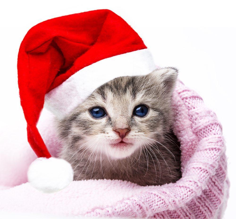 Haustiere sind keine geeigneten Weihnachtsgeschenke. . (Bild: Kuttelvaserova Stuchelova / Shutterstock.com)