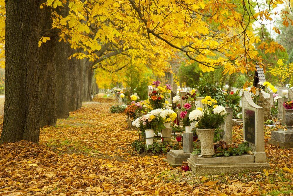 Die Natur als letzte Ruhestätte. Immer mehr Schweizer entscheiden sich gegen die Beisetzung auf einem traditionellen Friedhof. (Bild : images72 / Shutterstock.com)