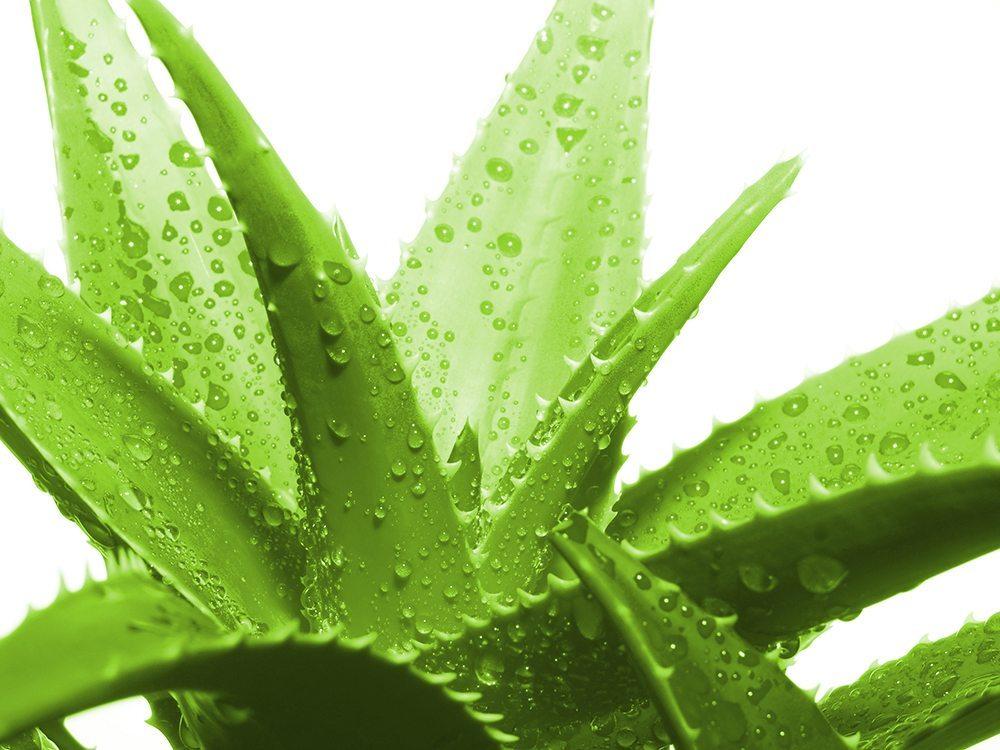 Zu den bekanntesten Vertretern für natürlich wirksame Gewächse zählen Ringelblume, Arnika, Aloe vera und Karotten. (Bild: tale / Shutterstock.com)