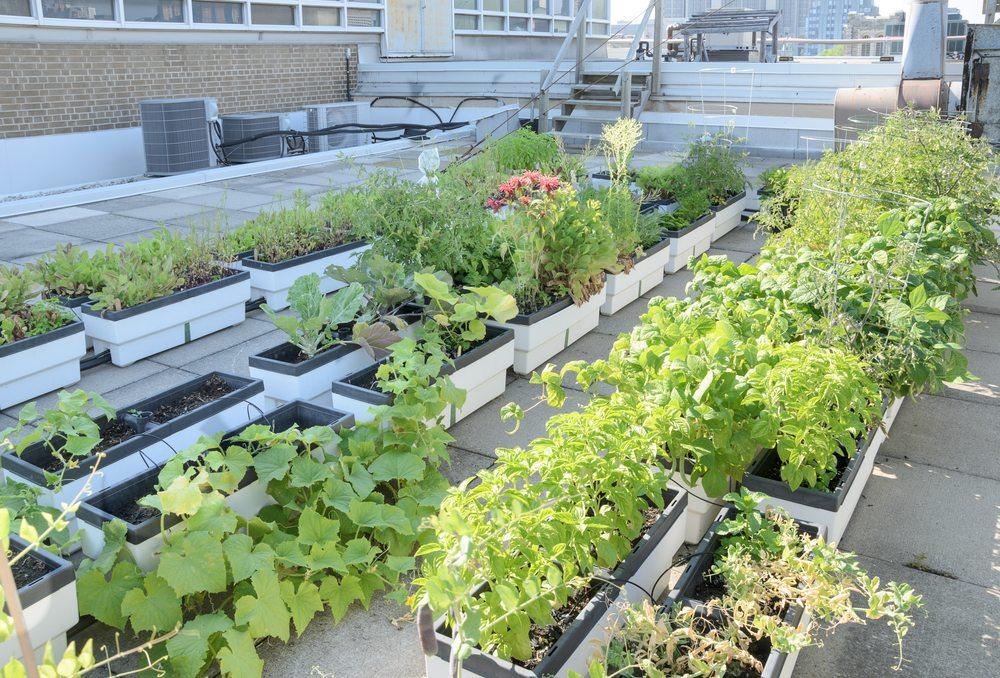 Urbaner Gartenbau produziert Lebensmittel da, wo sie verbraucht werden, und schafft Arbeitsplätze, verbessert die Luftqualität und reduziert Treibhausgase.