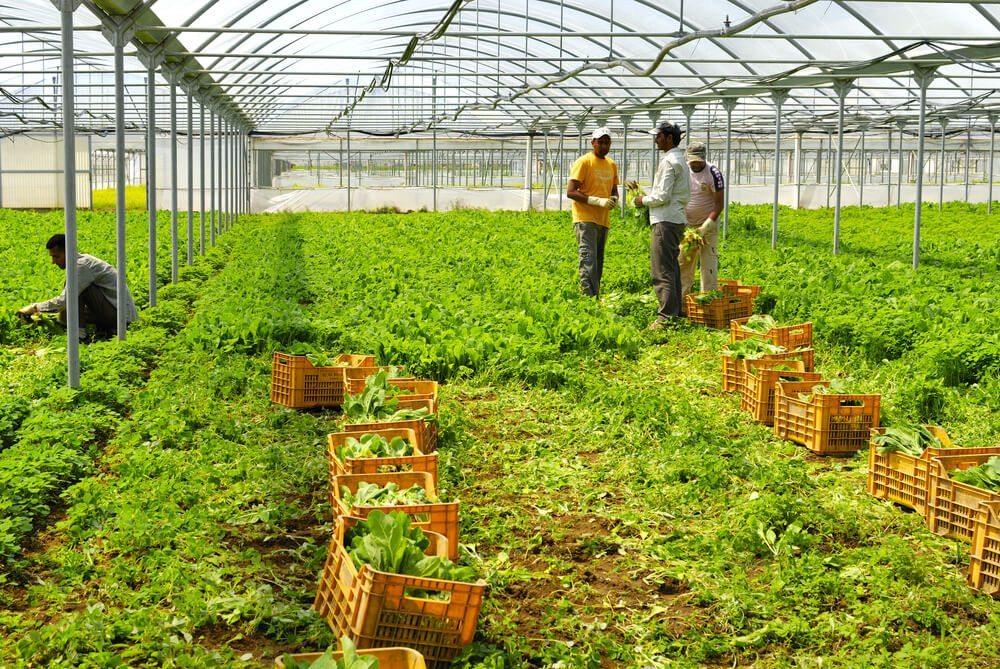 Die Arbeitsmarktintegration von Migranten ist volkswirtschaftlich wichtig. (Bild: © PaolikPhotos – shutterstock.com)