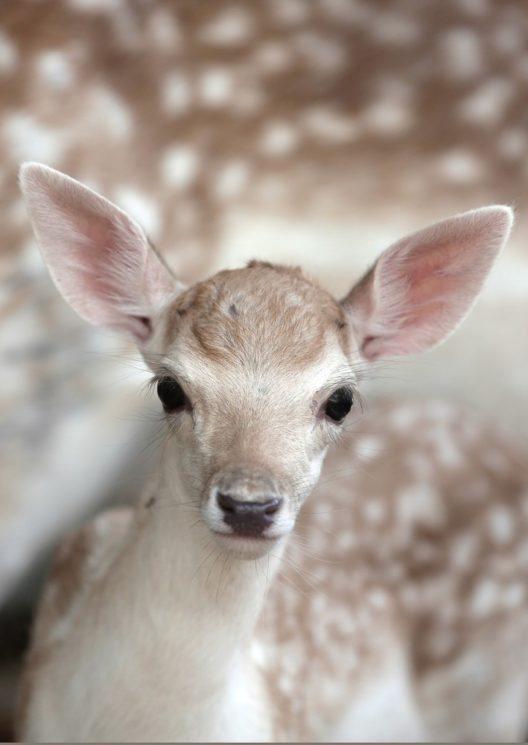 VIER PFOTEN Schweiz rettet Tiere aus dem Khan Younis Zoo in Gaza. (Bild: © VIER Pfoten)