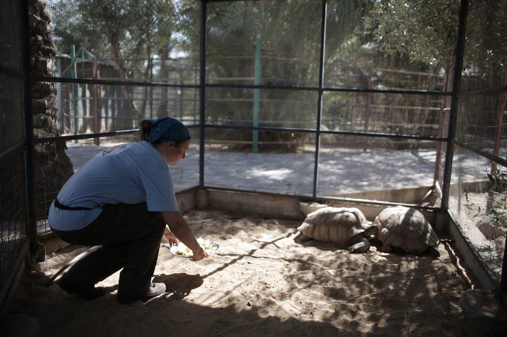 Dieses kleine Gehege musste bis dahin für zwei Schildkröten reichen. Diese Zustände gehören nun der Vergangenheit an. (Bild: © VIER PFOTEN | 2016)