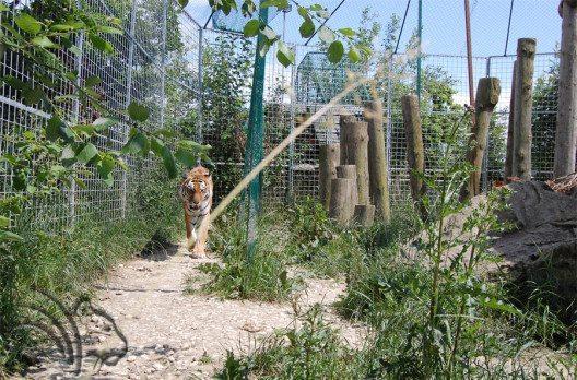 Tigergehege von Tajna & Cher (Bild: René Strickler's Raubtierpark)