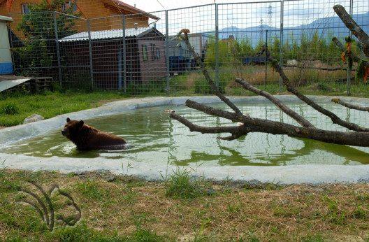 Bärengehege von Timka (Bild: René Strickler's Raubtierpark)