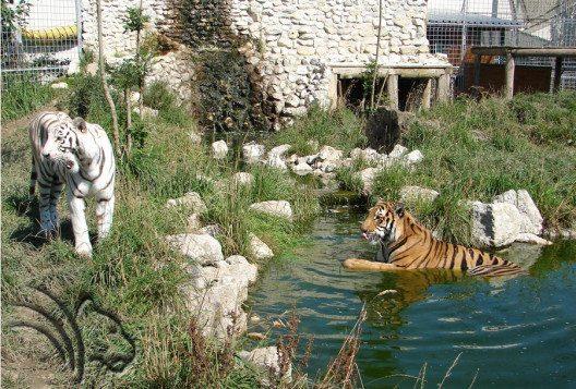 Tigergehege von Arisha, Amir & Noah (Bild: René Strickler's Raubtierpark)