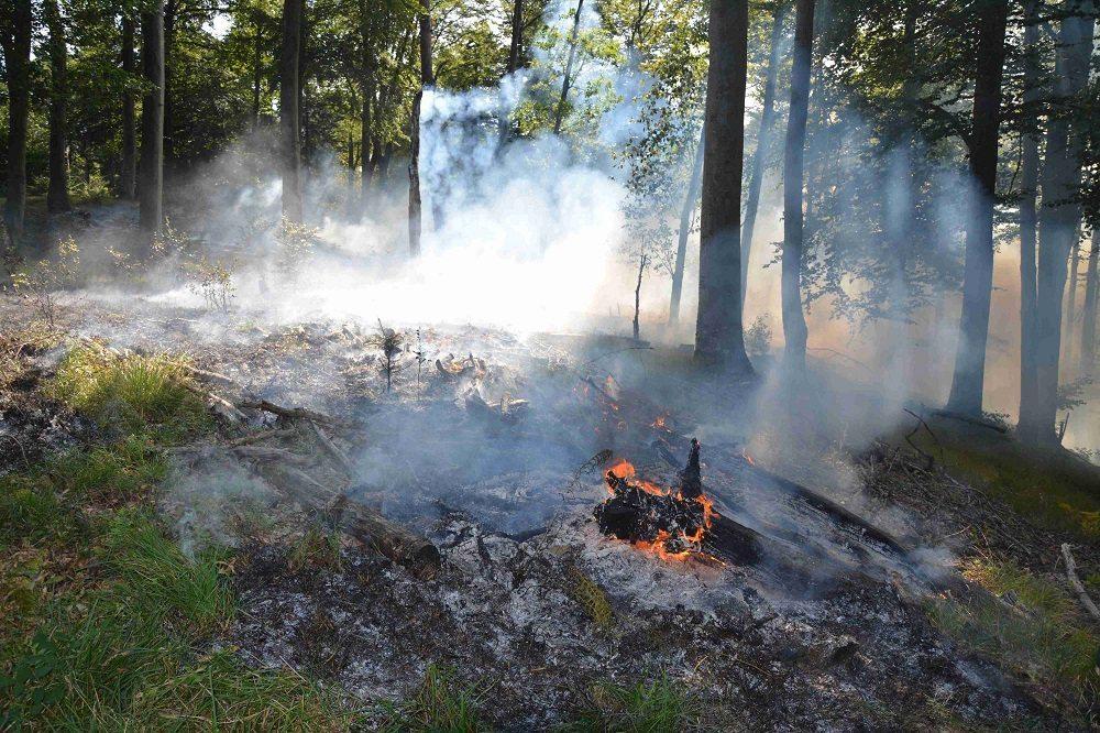 Waldbrand Kleinlützel