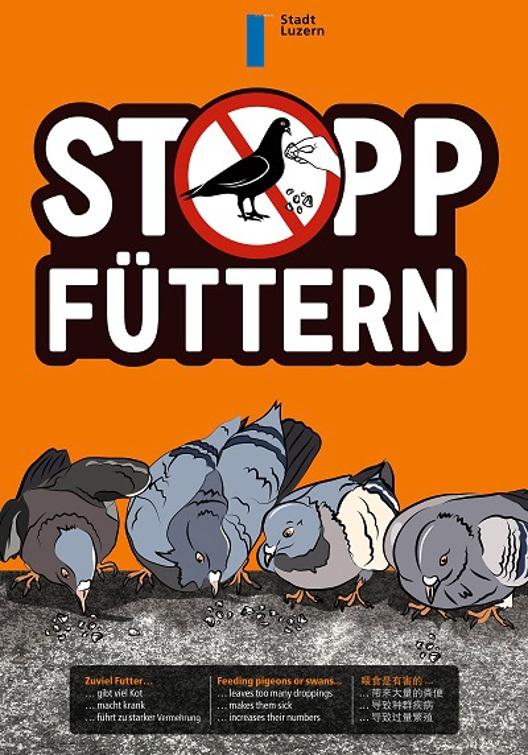 Plakatkampagne der Stadt Luzern: Tauben nicht füttern
