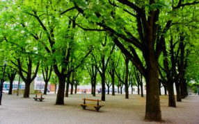 241 Bäume werden ersetzt – der Basler Baumbestand wächst